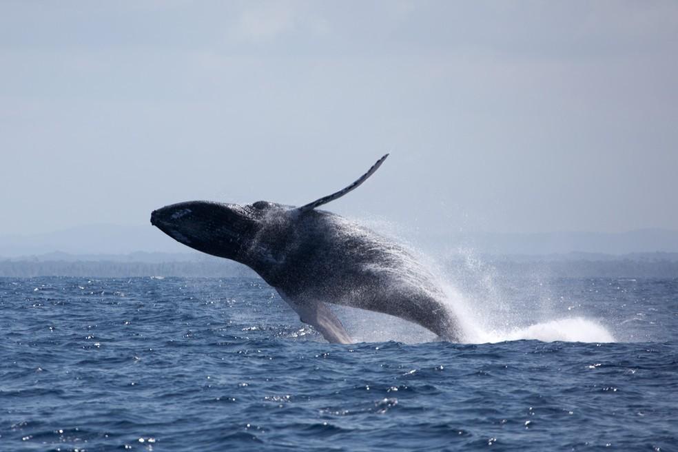 baleias jubartes atraem turistas ate o litoral baiano