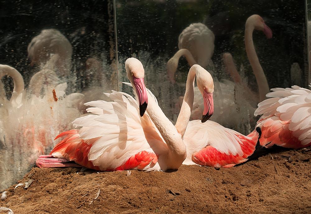 filhotes de flamingos são grande atração do parque das aves
