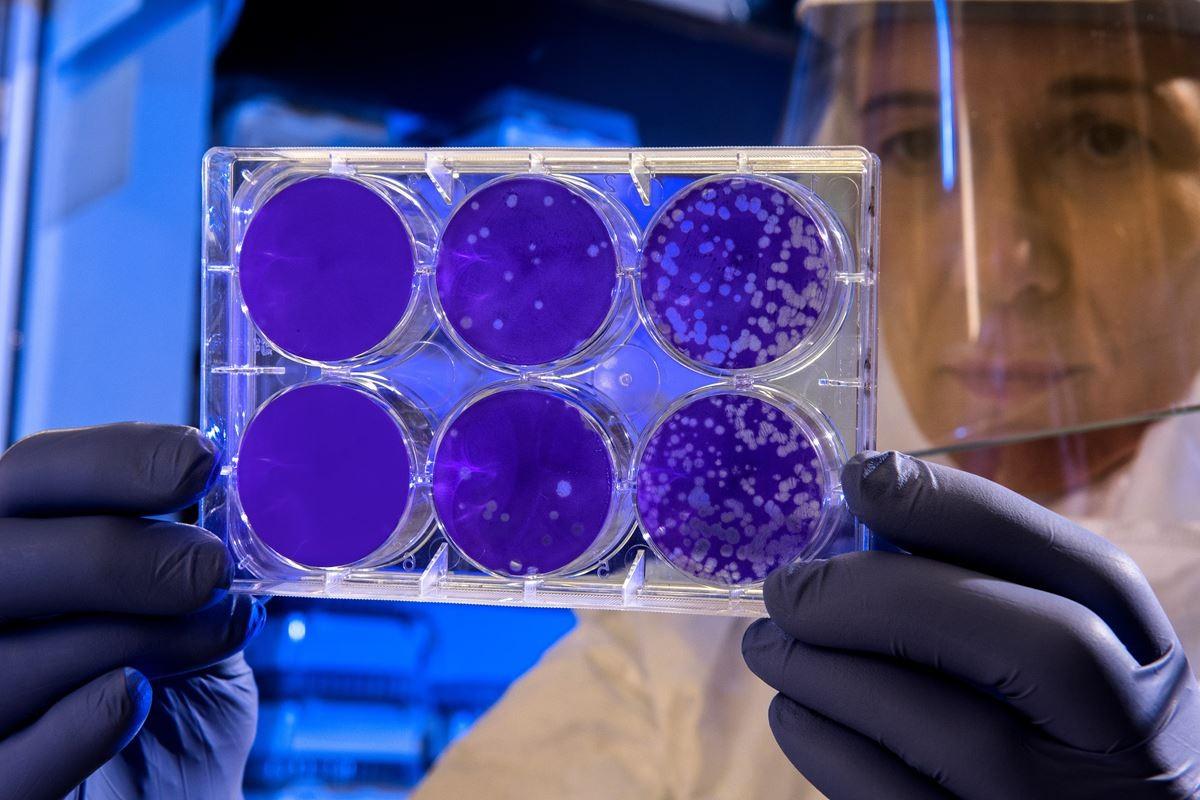 ivermectina para tratar o coronavírus é eficaz